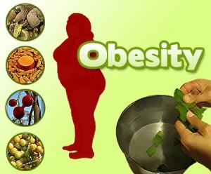 obesity herbs